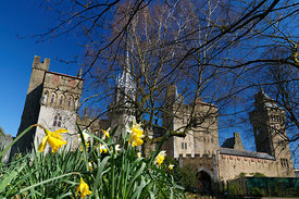 Cardiff Castle and Daffodils, Bute Park, Cardiff, South Wales.