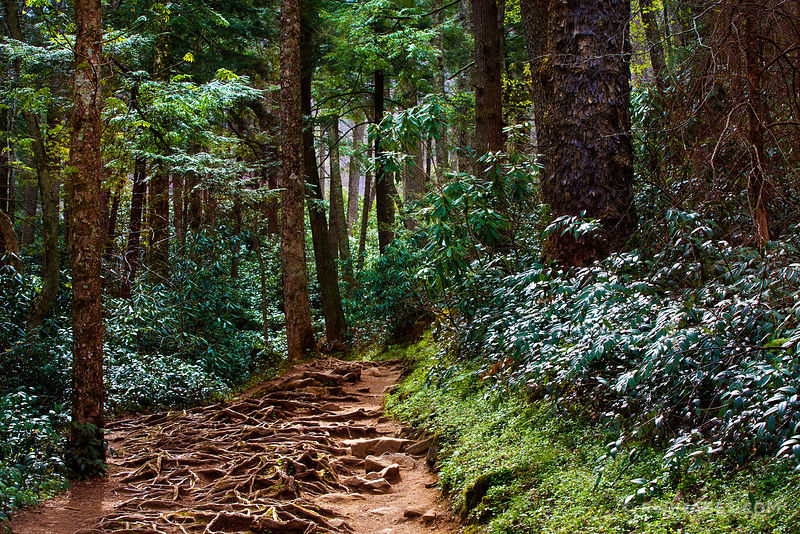 GROTTO FALLS TRAIL SMOKY MOUNTAINS NATIONAL PARK COLOR