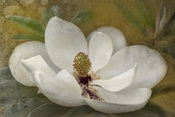 Magnolia Flower Photo | Wall Art