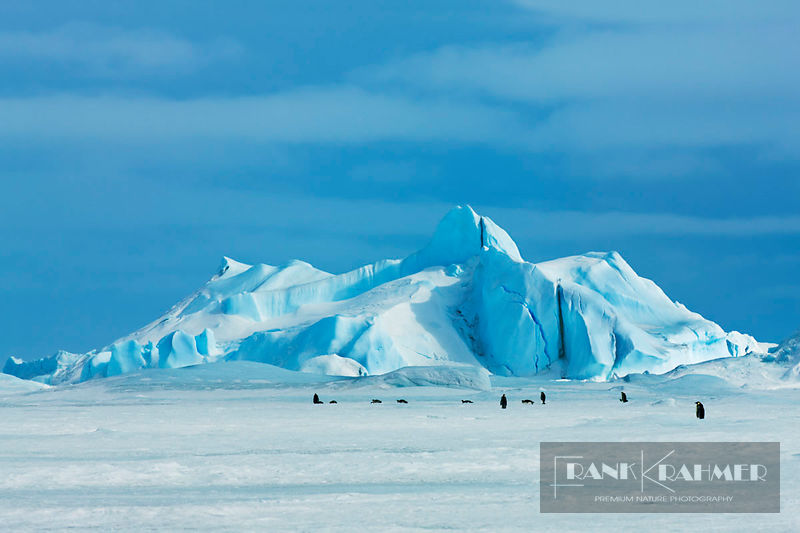 Iceberg and emperor penguins - Antarctica, Antarctica, Antarctic Peninsula, Snowhill Island - digital