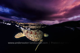 Turtle by night