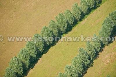 Aerial view over lines of trees