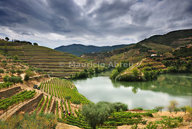 Grapes harvest along the river Tedo, a tributary of the river Douro. Alto Douro, a Unesco World Heritage Site, Portugal