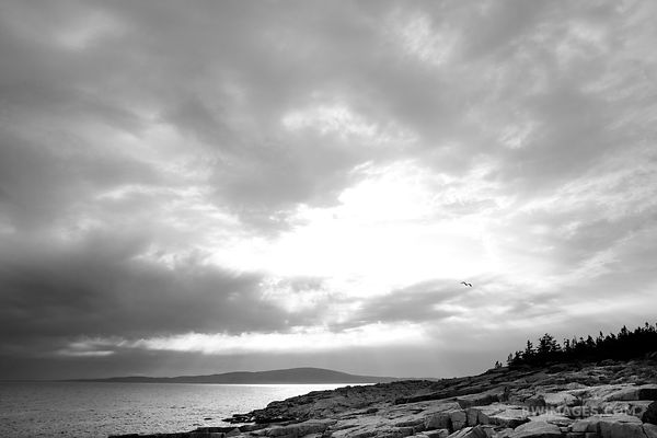 STATE OF MAINE STATE OF MIND - SCHOODIC PENINSULA ACADIA NATIONAL PARK MAINE BLACK AND WHITE