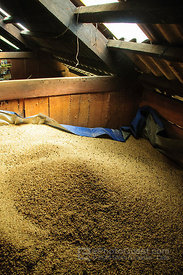 Rice Stored in Village House Loft