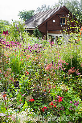 Bed near the house full of pink, red, purple and magenta herbaceous perennials and annuals including agastache, Filipendula purpurea 'Elegans', monardas and dahlias. Hunting Brook Garden, Co Wicklow, Ireland