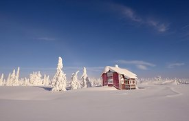 Vinter / Winter at Hedmarksvidda, Norway