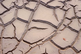 Cracked mud