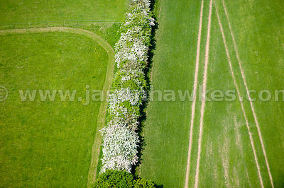 Hedgerow, Fields, Hertfordshire