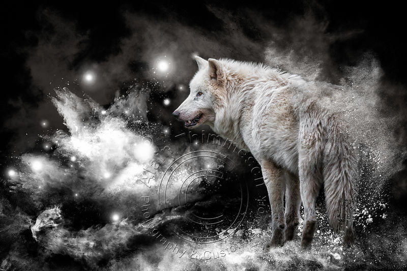 Art-Digital-Alain-Thimmesch-Loup-16