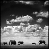 8419-Elephant_Under_the_clouds_I_Kenya_2006_Laurent_Baheux