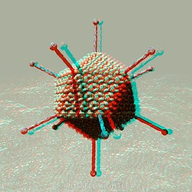 Anaglyph of Adenovirus particle