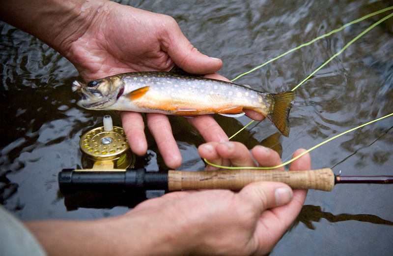 011-Blue_Ridge_D126010_Brook_Trout_Fishing_Detail_-_Preview