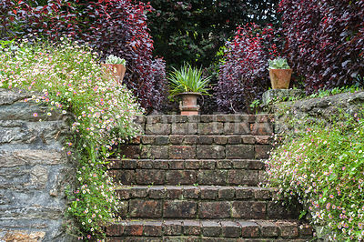 Steps are framed by self seeded Mexican daisies, Erigeron karvinskianus, and potted succulents, with astelia in urn above. Bosvigo, Truro, Cornwall, UK
