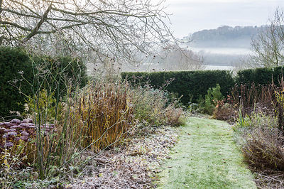Frosted herbaceous plants in the Old Garden.