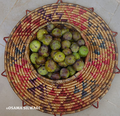 Fruits of Palestine - Figs