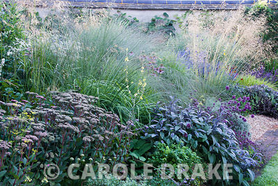 Deep purples of Sedum telephium 'Matrona' and Salvia officinalis 'Purpurascens' with airy grasses above, Molinia 'Transparent' and Stipa gigantea. Broughton Buildings, Broughton, nr Stockbridge, Hants, UK