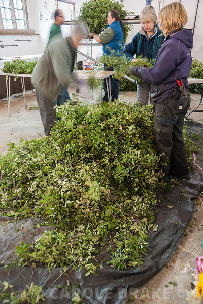 Volunteers prepare swags of pittosporum in the Great Hall, ready for attaching to the rope that forms the central core of the Christmas garland. Cotehele, St Dominick, nr Saltash, Cornwall, UK