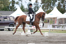SI_Dressage_Champs_260114_048