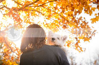 white terrier being held by owner with autumn leaves and sunflare