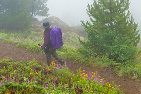 Hiker on Mount Townsend Trail in Olympic National Forest