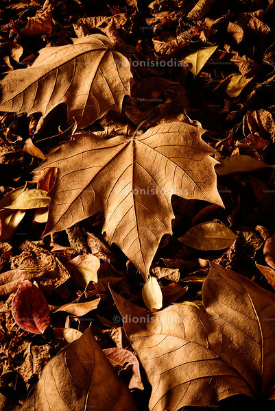 Dried leaves of autumn vertical