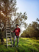 olive_picker_molise_portrait_I