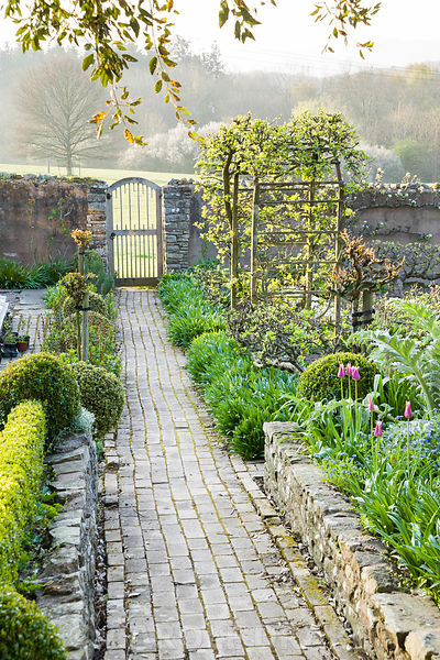 Brick paths in the walled kitchen garden pass beds edged with step-over apples and clipped box towards a gate leading into surrounding fields. Brilley Court Farm, Whitney-on-Wye, Herefordshire, UK