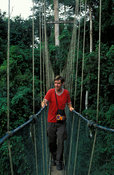 Tourist on the canopy walk, 350m long walkway, 40m high in rainforest, Kakum National Park, Ghana