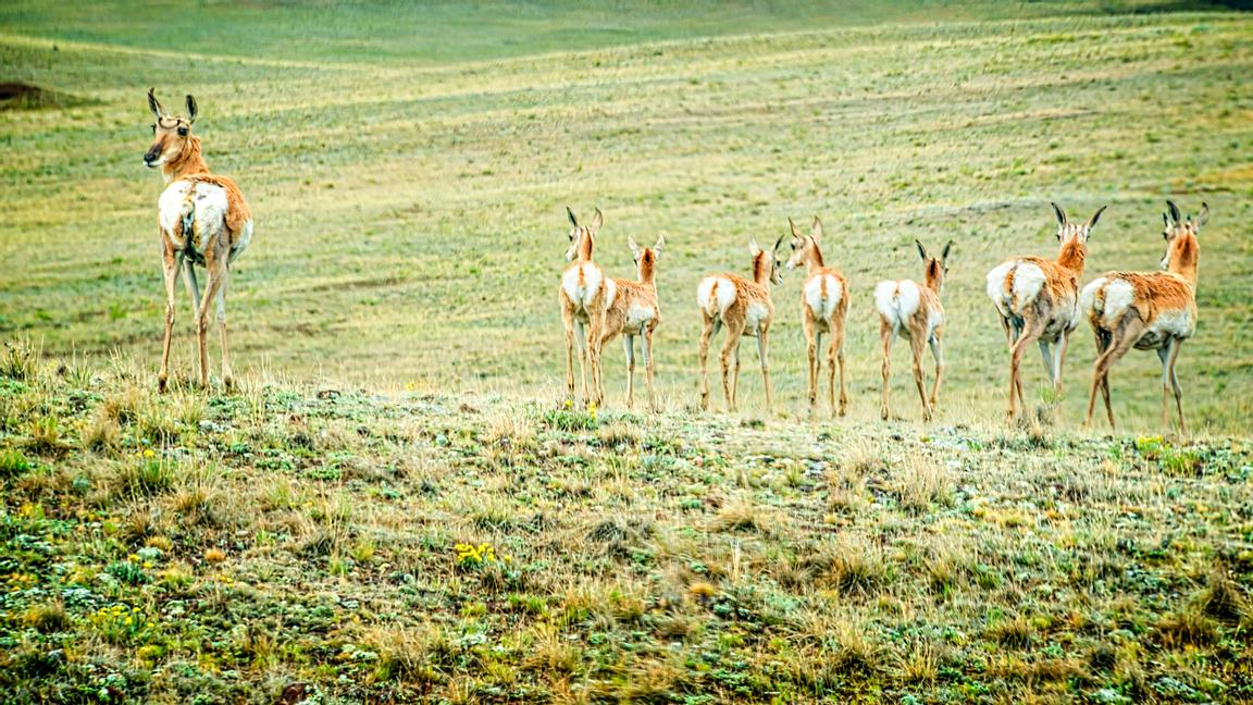 Deer & Antelope photos