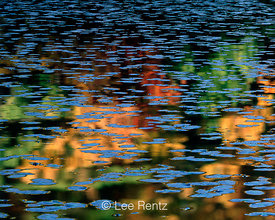 HOMAGE TO MONET 1:  Space and Time