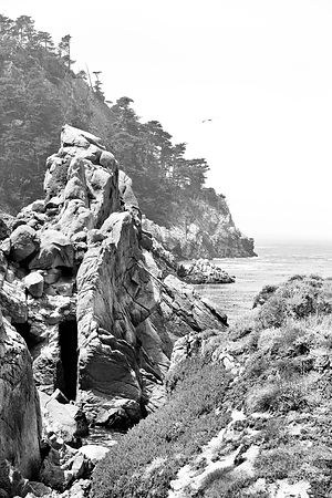 Photo print of kelp in the sea water point lobos - Interior design license california ...