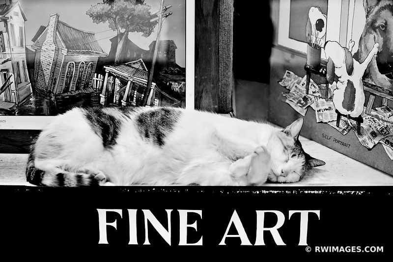 FINE ART OF SLEEPING CAT NEW ORLEANS LOUISIANA BLACK AND WHITE