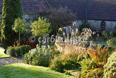 Border in the front garden planted wtih grasses, hebes, ferns, euphorbia and standard hollies hung with Christmas decorations above the orange lanterns of Physalis alkekengi