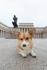 Dog lying in front of a Rodin Thinker statue at a museum