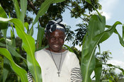 Kenyan farmer working in her maize plants. Kenya.