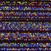 DNA/RNA photos