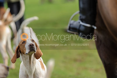 Fitzwilliam Hunt Opening Meet 5/11 photos