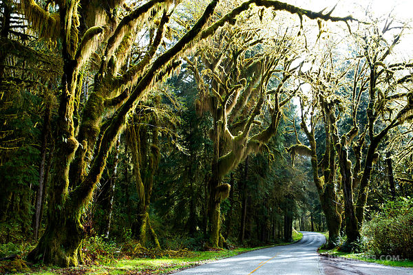 ROAD TO HOH RAINFOREST OLYMPIC NATIONAL PARK WASHINGTON