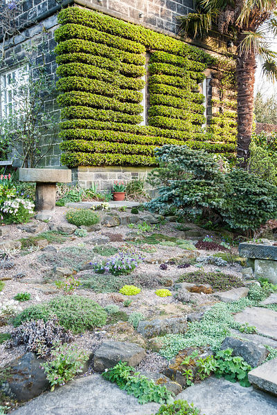 The Paved Garden features a small rockery, stone troughs, a greenhouse bursting with cacti and succulents, all framed by a smartly trained pyracantha on the house. York Gate Garden, Adel, Leeds, Yorkshire