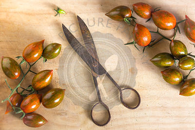 bunches of pointed tomatoes with vintage metal scissors on wood