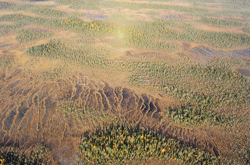 Aerials view of Peat bog, Oulanka National Park, Finland, September 2008