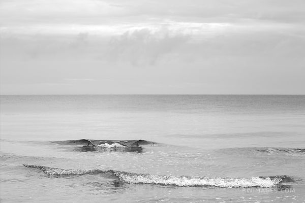ATLANTIC OCEAN HERRING COVER BEACH CAPE COD MASSACHUSETTS BLACK AND WHITE