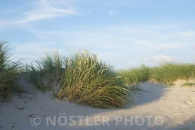 The Dune of Amager Strandpark