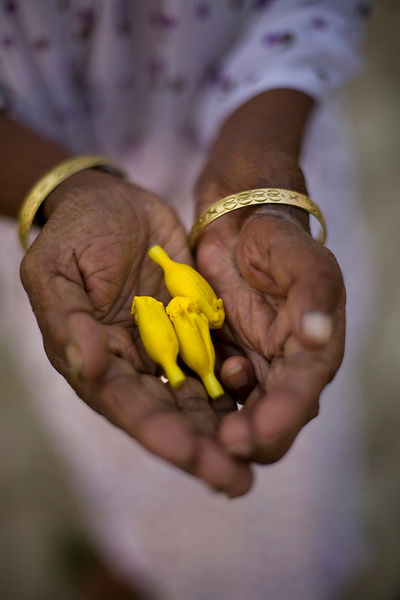 India - Cuddalore - A woman holds blossoms that she will use as offerings