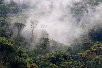 Fog envelopes the rainforest, Las Nubes, Costa Rica