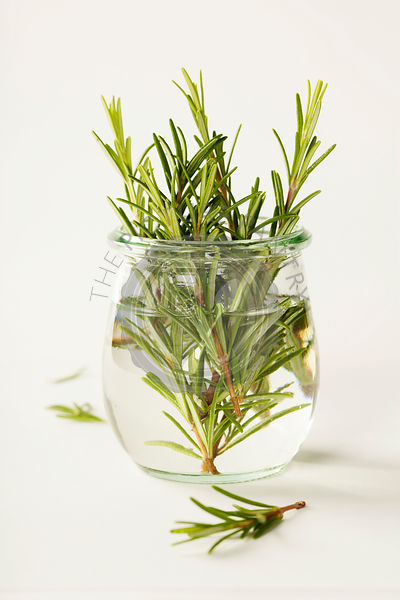 Fresh italian herbs in water on white background