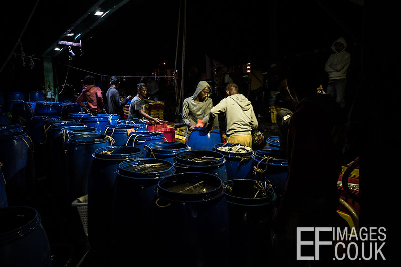 Fishermen sorting the day's catch at the Kota Kinabalu Fish Market. Sabah, Malaysia, March 2018