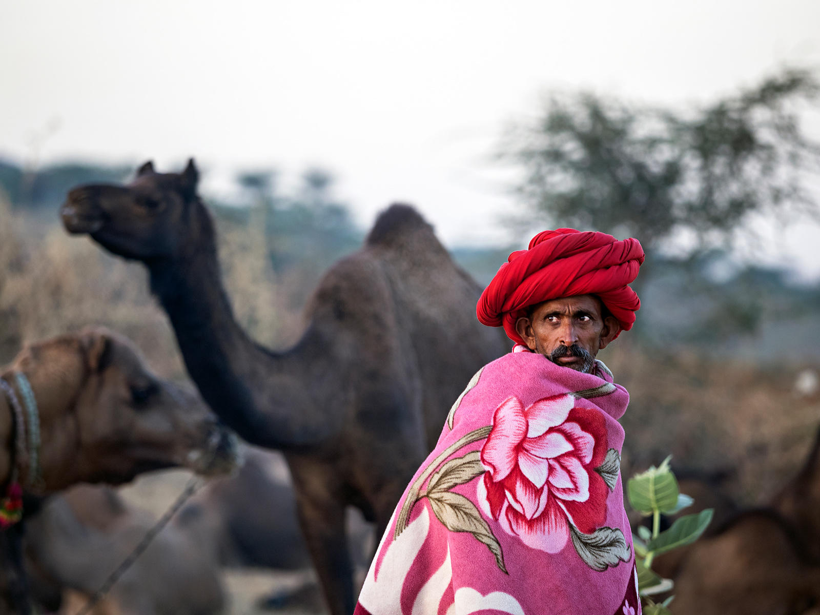 Morning at the Pushkar Fair