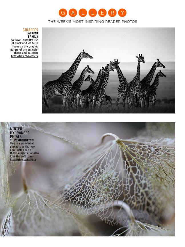 PhotographyWeek-Issue126-Gallery